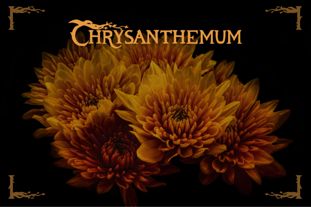 Fall Flowers Chrysanthemum