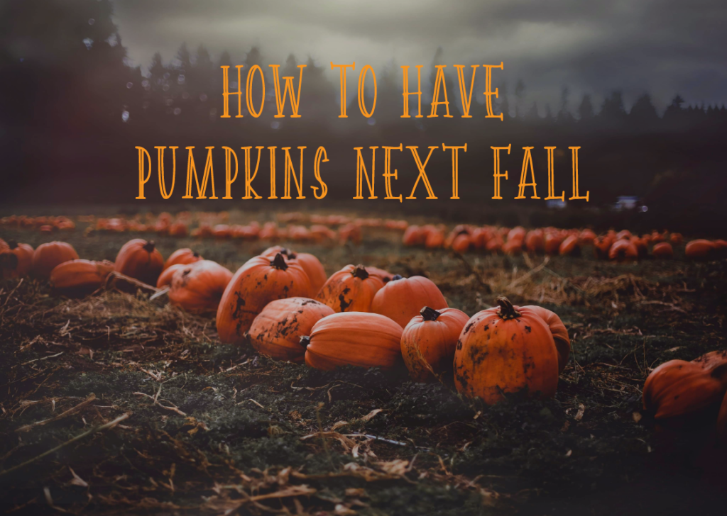 How to Have Pumpkins Next Fall